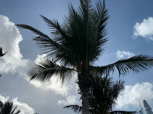 Palm Tree in Cozumel, Mexico