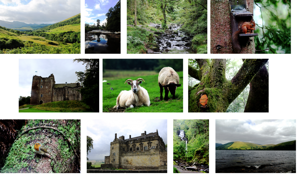 Some holiday photographs
