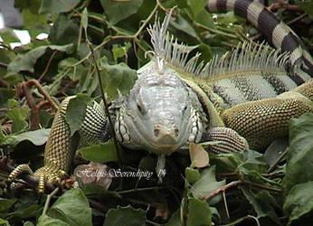 Lizard by Helens-Serendipity