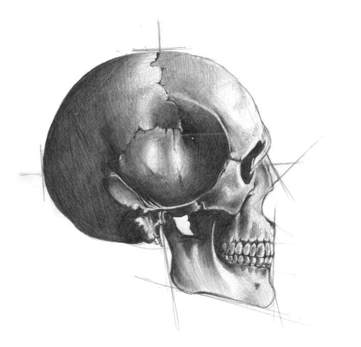 It's just a photo of Vibrant Skull Profile Drawing