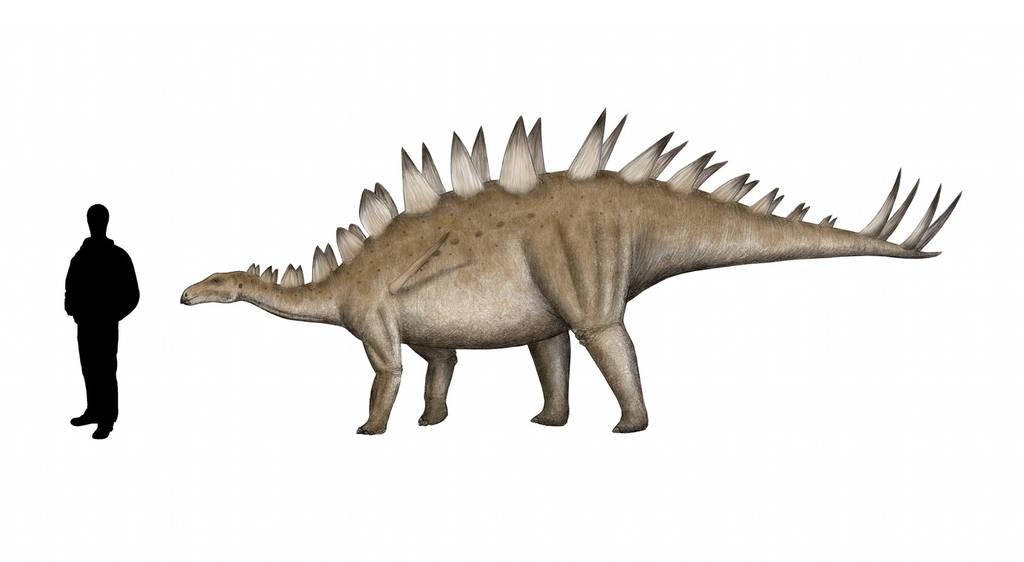 Tuojiangosaurus multispinus by Pachyornis