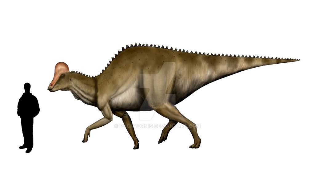 Hypacrosaurus altispinus by Pachyornis
