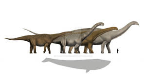 Largest Sauropods?