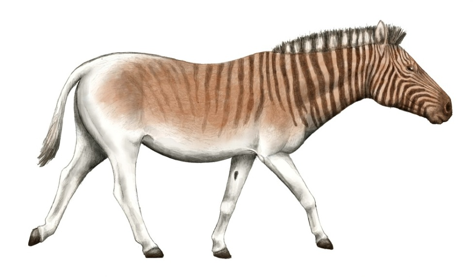 of the Quagga Project