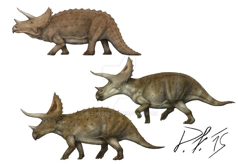 triceratops_over_the_centuries_by_pachyornis-d960xsq.jpg