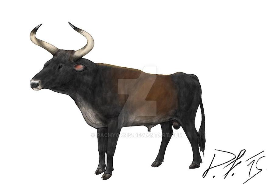 the breeding back blog life illustration of the indian aurochs
