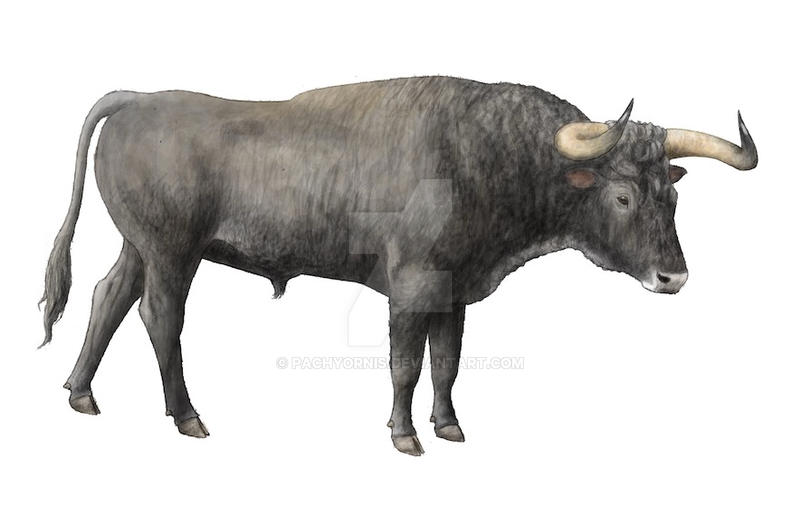 the breeding back blog another aurochs bull reconstruction