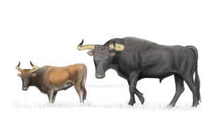 Aurochs bull and cow