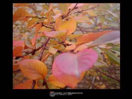 autumn by karimkhani