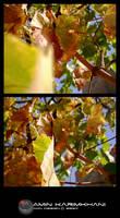 autumn 2 by karimkhani