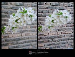 Blossom by karimkhani