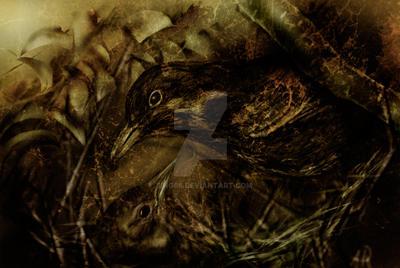 Blackbirds by bing66