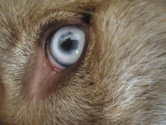 Eye of the Beast by Samurai--Kai
