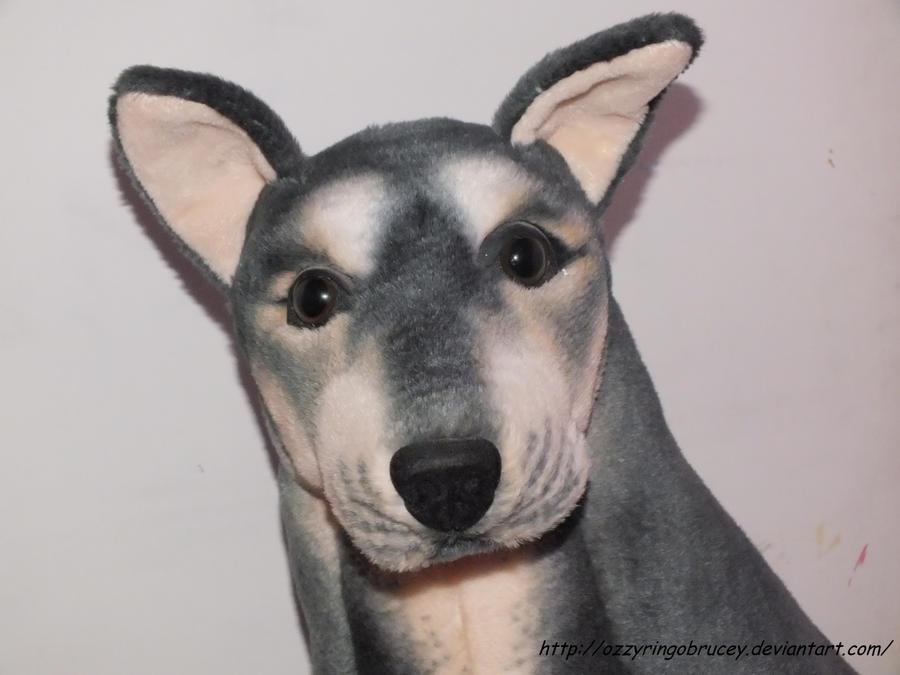 Wolf / Dog Hybrid Face close up by OzzyRingoBrucey on DeviantArt