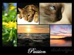 Passion III
