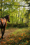 The Horse And The Autumn Wood