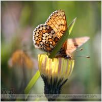 Butterfly Series XII by darkcalypso