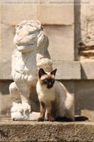 Feline Protection by darkcalypso