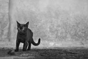 Alone In The Dark by darkcalypso