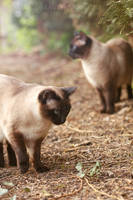 Curious Feline Curiosity by darkcalypso