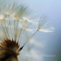 Waltz Of The Flowers by darkcalypso