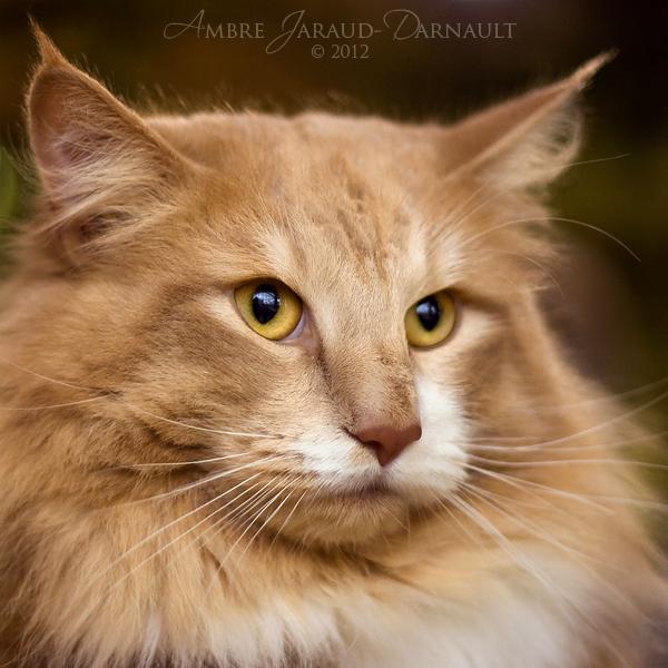 Baltard Feline Show 2012 - VIII by darkcalypso