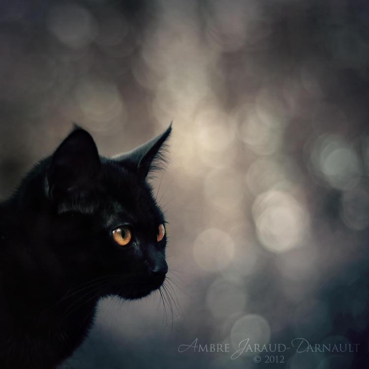 The Dark Magician