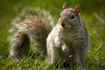 Squirrelish by darkcalypso