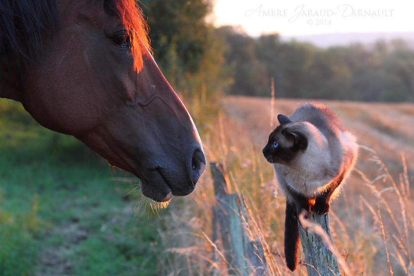 Two Worlds Meet