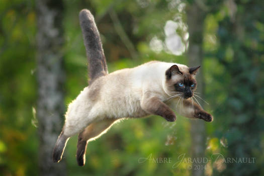You Can Fly ! You Can Fly ! You Can Fly !