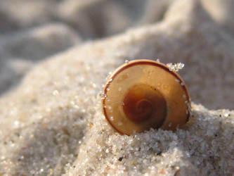 Sunny Shell-Shells Series by Rontarija