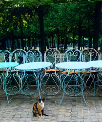 cat can wait by AnaDeviant