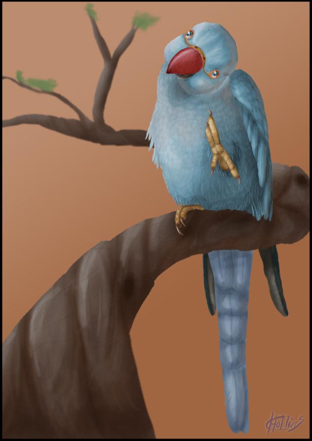 Mylo Indian Ringneck Parrot By Psittadragon On Deviantart