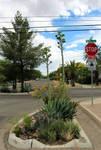 Tucson Street Corner