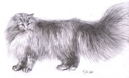 Norwegian Forest Cat by Alranth