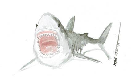 tiburon en acuarela by ivanutrera