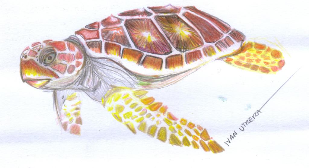 tortuga en lapices de colores by ivanutrera on DeviantArt