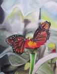 butterflies by starfishenterprise