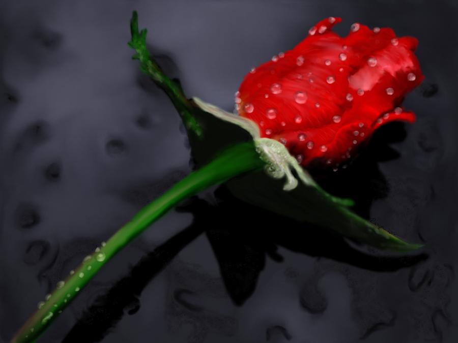 Rose by Sadict