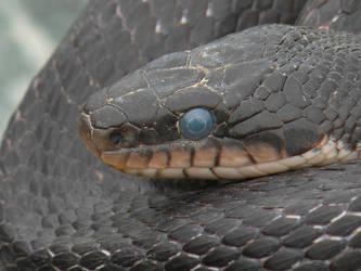 Snake Eye by SBricker