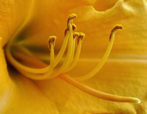 'Anticipation, In Yellow'