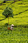 Tea _ Man by alsaigh