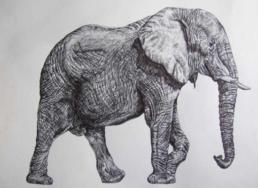 Ink Elephant by MollySpeaight