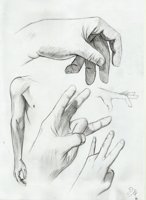 Hand Anatomy studies by DSC-the-Artist on DeviantArt