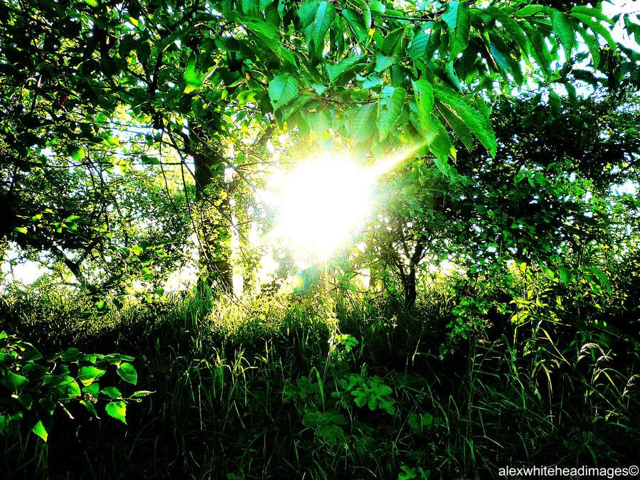 sunlight through trees black - photo #28