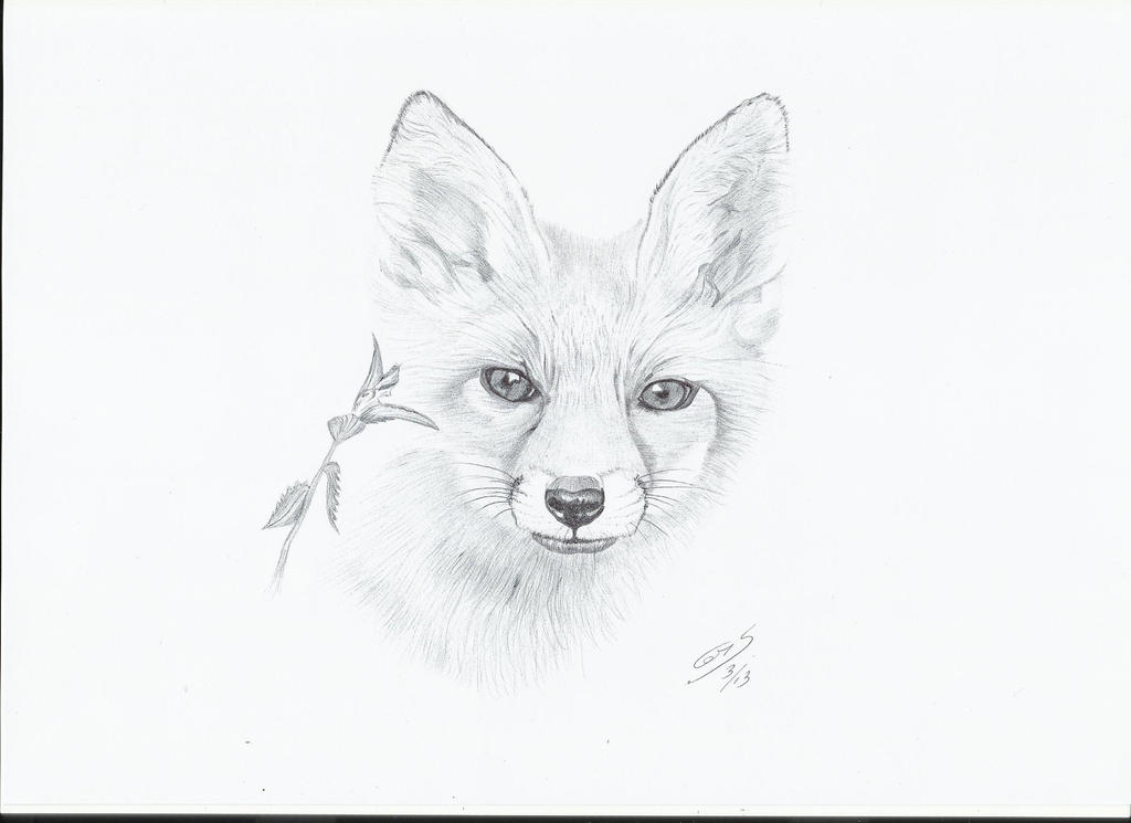 Fox Face Line Drawing : Fox sketch by chrisberry on deviantart