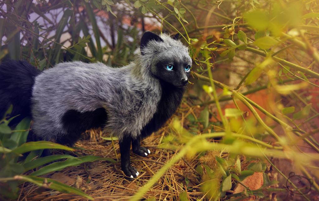 Silver fox by LisaToms