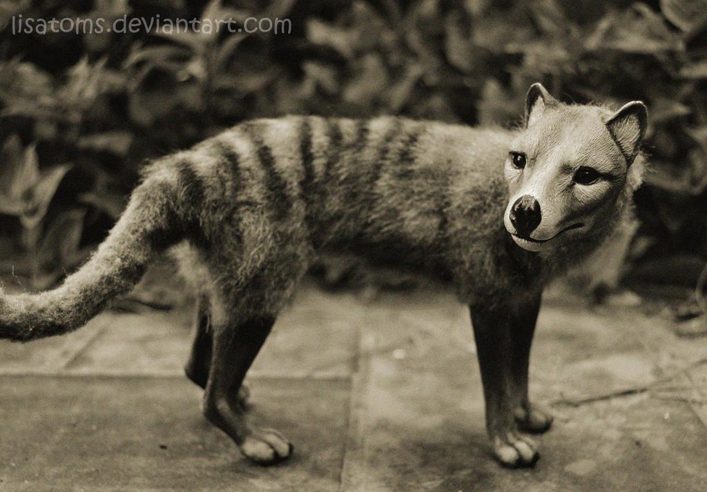Thylacine by LisaToms on DeviantArt