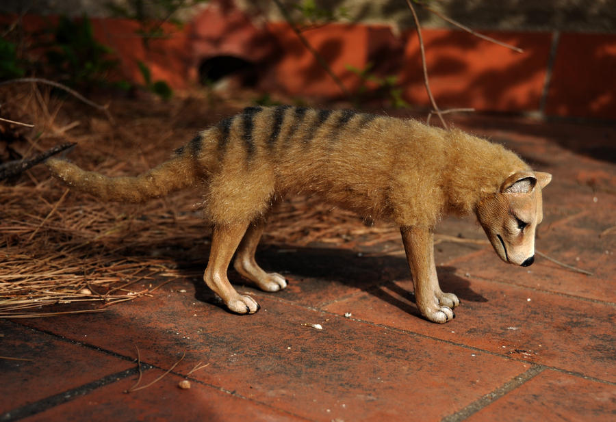 Thylacine doll- more views by LisaToms