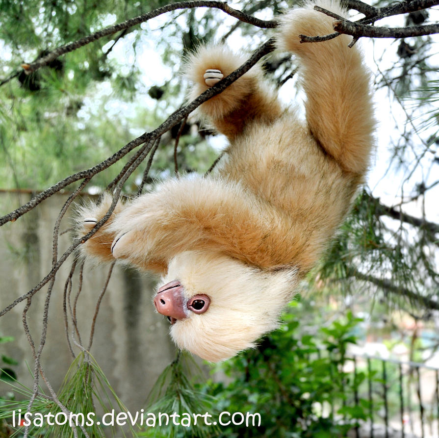 Two-toed sloth by LisaToms